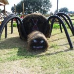 hay spider