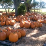 pumpkins1