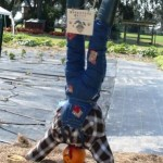 scarecrow 2010 winner