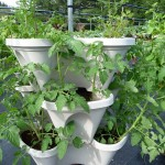 tower of young tomatoes
